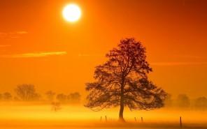 morning-dawn