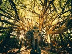 shiva-tree-temple