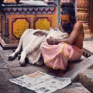 sadhu and cow