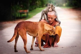 monk with dog and monkey